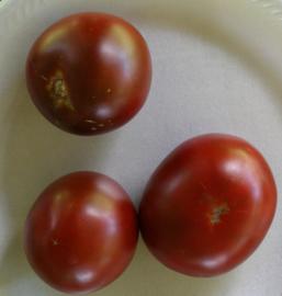 Tomaat 'Dice's Mistery Black', Solanum lycopersicum