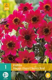 Dahlia border enkelbloemig 'Happy Days Cherry Red' 30 cm