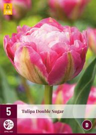 Tulipa dubbel laat 'Double Sugar'