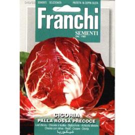 Roodlof 'Palla Rossa', Cichorium intybus var. foliosum
