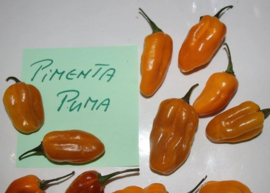 Peper 'Pimenta Puma', Capsicum chinense