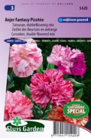 Dianthus caryophyllus 'Fantasy Picoteé Mix', Tuinanjer Anjer
