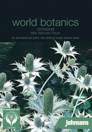 Eryngium giganteum 'Miss Willmotts ghost', Kruisdistel