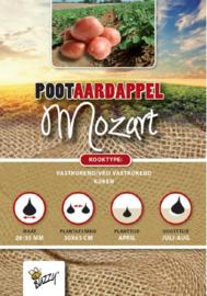 Aardappel vastkokend 'Mozart'