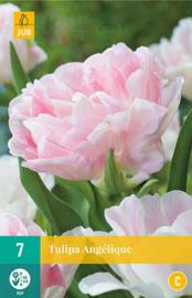 Tulipa dubbel laat 'Angélique'