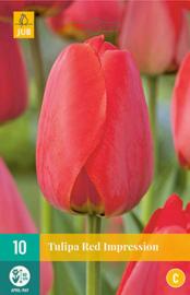 Tulipa darwin hybride 'Red Impression'