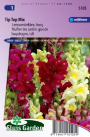 Antirrhinum majus 'Tip Top Mix', Leeuwenbek