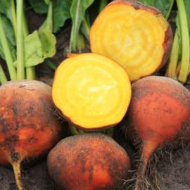wortel- en knolgewassen