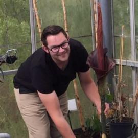 Amorphophallus konjac - Reuzen voodoo lelie of penisplant