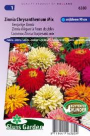 Zinnia elegans 'Chrysanthemum Mix', Zinnia
