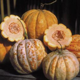 Kantaloepmeloen ananasmeloen 'Oranje Ananas', Cucumis melo