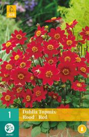 Dahlia border topmix 'Red' 50 cm