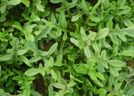 Overige blad- en stengelgewassen
