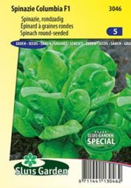 Spinazie rondzaad 'Columbia F1', Spinacia oleracea
