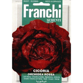 Roodlof 'Orchidea Rossa', Cichorium intybus var. foliosu