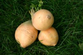 Koolraap 'Friese Gele', Brassica rapa var. napus Biologisch