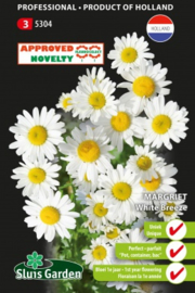 Leucanthemum vulgare 'White Breeze', margriet