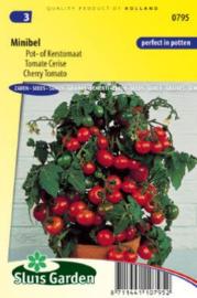Cherrytomaat pot 'Minibel', Solanum lycopersicum