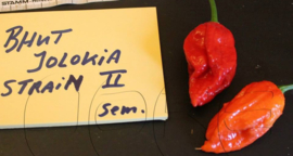 Peper 'Bhut Jolokia Improved Strain 2', Capsicum chinense