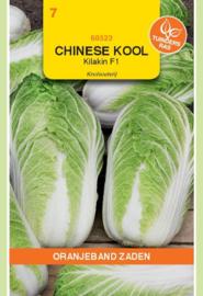 Chinese kool 'Kilakin F1', Brassica rapa var. pekinensis