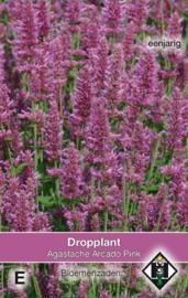Agastache X 'Arcado Pink', Dropplant
