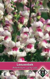 Antirrhinum majus 'Lucky Lips', Leeuwebek