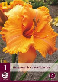 Hemerocallis 'Colonel Mustard', Daglelie