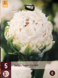 Tulipa dubbel gefranjerd 'Snow Crystal'