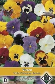 Viola x witrockiana 'Zwitserse Reuzen', Viooltje tweejarig