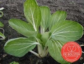 Paksoi 'Taisai', Brassica rapa var. chinensis Biologisch