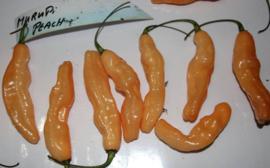 Peper 'Murupi Peach F3', Capsicum chinense