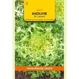 Andijvie (krul) 'St. Laurent', Cichorium endiva crispa