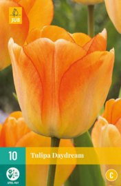Tulipa darwin hybride 'Daydream'