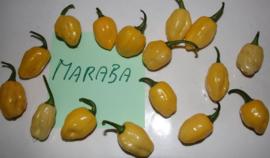 Peper 'Maraba', Capsicum chinense