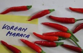 Peper 'Korean Maraca', Capsicum annuum