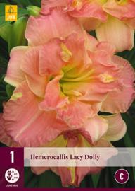 Hemerocallis 'Lacey Doily', Daglelie