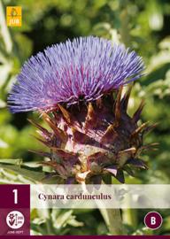 Cynara cardunculus, Kardoen