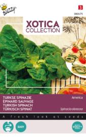 Wilde spinazie of Turkse spinazie, Spinacia oleracea