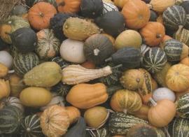 Pompoen kalebas 'Mixture Small', Cucurbita pepo
