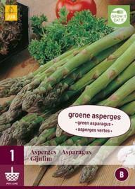 Asperge groene 'Gijnlim', Asparagus officinalis