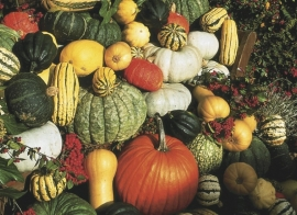 Pompoen eetbare mix 'Mixture Big', Cucurbita maxima/moschata/pepo