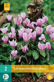 Cyclamen hederifolium, Zomer cyclaam