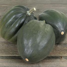 Pompoen Acorn 'Green Tangerine F1', Cucurbita pepo Biologisch