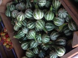 Pompoen kalebas 'Dancing or Spinning Gourd', Cucurbita pepo