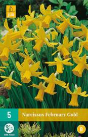 Narcissus botanisch 'February Gold'