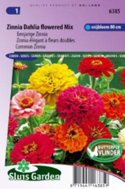 Zinnia elegans 'Dahlia Flowered Mix', Zinnia