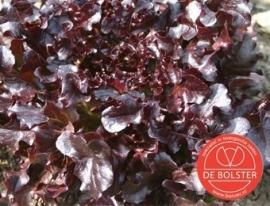 Eikenbladsla pluksla 'Red Salad Bowl', Lactuca sativa Biologisch (voorlopig uitverkocht)