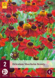 Helenium 'Moerheim Beauty', Zonnekruid