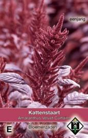 Amaranthus cruentus 'Velvet Curtains', Kattenstaart