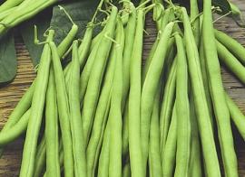 Stokslaboon sperzieboon 'Mamba', Phaseolus vulgaris